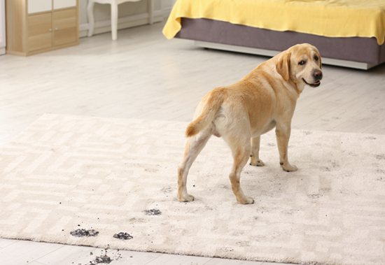Pet-Stain-Removers